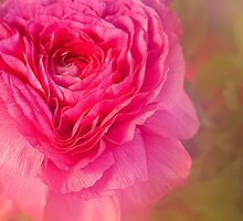 Big Pink by Marilyn Cornwell