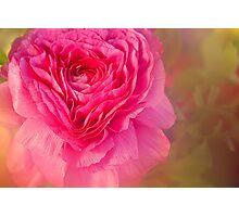 Big Pink Photographic Print