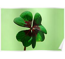 Irish Luck Poster