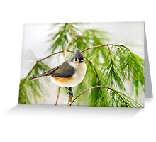 Winter Pine Bird Greeting Card