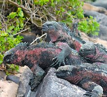 Iguana Pile by jhuxster