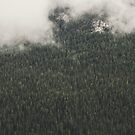 Cloudy Woods by RookieDesign