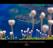 A Rabbits View - Crater Lake NP by capturedjourney