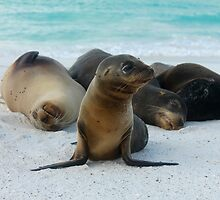 Galapagos Wildlife by jhuxster