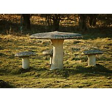 Toadstool Chairs & Table Photographic Print