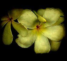 Thai Flowers III by Louise Fahy