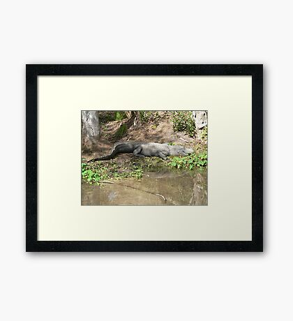 Gator Chillin' Framed Print