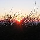 sunset through the grass by harryland93