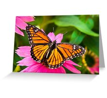 Orange Viceroy Butterfly Greeting Card