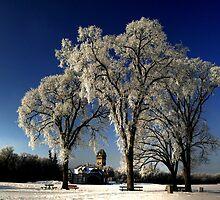 Breathtaking Beauty by Larry Trupp