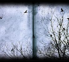 Fly away from here by Claire Dimond