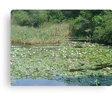 Restful Lilies Canvas Print
