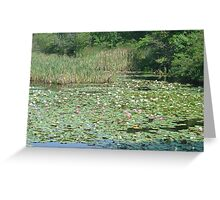 Restful Lilies Greeting Card