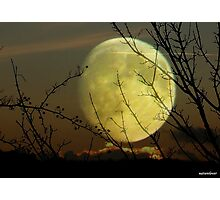 By Moonlight..... Photographic Print