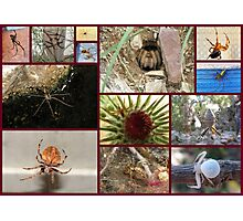 Arachnaphobia ~ Fear of Spiders Photographic Print