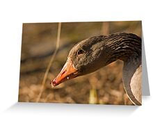 graylag goose Greeting Card