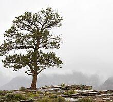 Lone Tree at Red Canyon by Kim Barton