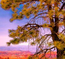 Ponderosa Pine Sticker