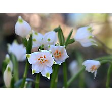 The heralds of spring Photographic Print