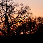 Millcreek Park Sunset by Monica Vanzant