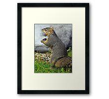 Rabid Squirrel or Stuffing Stealer? Framed Print