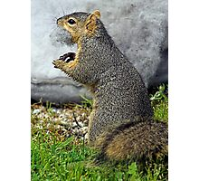 Rabid Squirrel or Stuffing Stealer? Photographic Print
