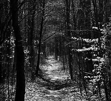 Lost in the Woods by Carl  Cruthis