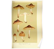 Illustrations of British Fungi by Mordecai Cubitt Cook 1891 V3 0573 AGARICUS  INOCYBE  DESTRICTUS Poster