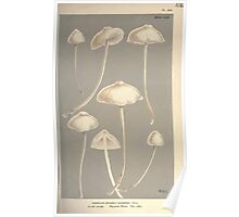 Illustrations of British Fungi by Mordecai Cubitt Cook 1891 V2 0325 AGARICUS  MYCENA  SUDORUS Poster