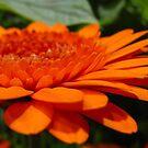 Orange Infusion by Sviatlana