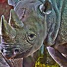 Black Rhino by creepyjoe