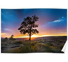 Ponderosa Sunset at Red Canyon Poster