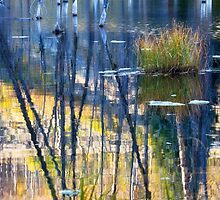 Beaver Pond Reflections by Kim Barton