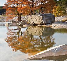 Cypress Reflections by Kim Barton