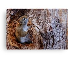 Red Squirrel - Ottawa, Ontario Canvas Print