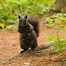 Black Squirrel - Mud Lake by Michael Cummings
