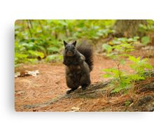 Black Squirrel - Mud Lake Canvas Print