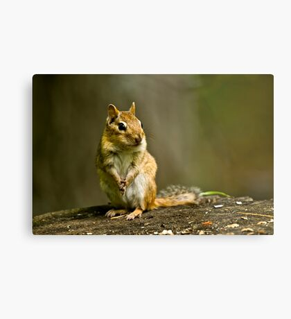 Please Sir can I have some more? Metal Print