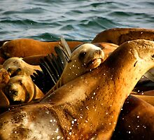 Sea Lions by soyrwoo