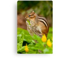 Chipmunk on Log Canvas Print