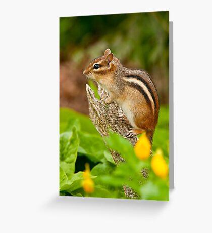 Chipmunk on Log Greeting Card