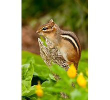 Chipmunk on Log Photographic Print