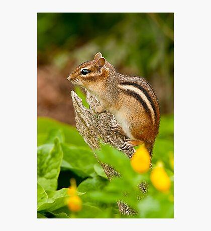 Chipmunk on Log Photographic Print