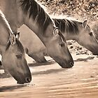 Wild Horses in Sepia by Kim Barton