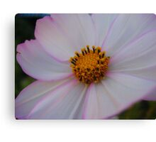 Soft White Flower Macro Canvas Print