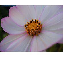 Soft White Flower Macro Photographic Print