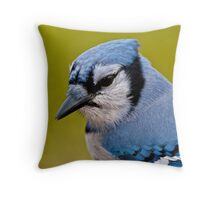 Blue Jay Portrait Throw Pillow