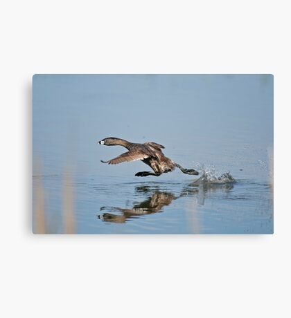Oh Ya they call him the Streak Canvas Print