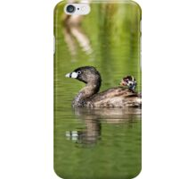Pied Billed Grebe and Babies - Ottawa, Ontario iPhone Case/Skin
