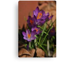 Crocus Crown Canvas Print